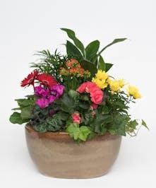 Blooming Beauty Garden