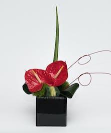Artful Anthurium