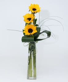 Picasso Sunflowers