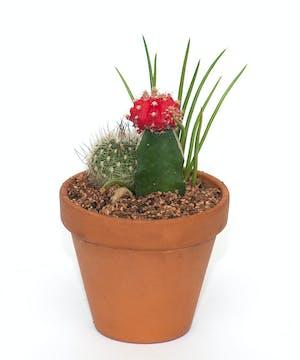 Cactus Garden - 4