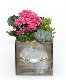 Secret Garden Box