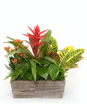 Tropical Style European Dishgarden