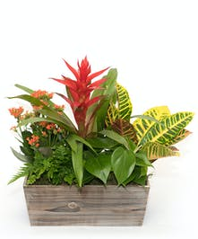 European Garden with Tropical Bromeliad