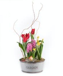 Farmhouse Spring Bulbs