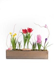 Spring Window Garden