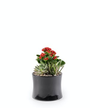 Sweet Red Succulent Planter
