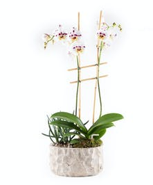 Orchid and Succulent Planter