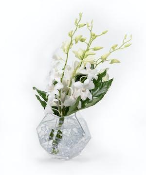Prismatic Orchids