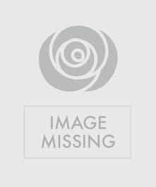buy half dozen roses Grad Rapids MI