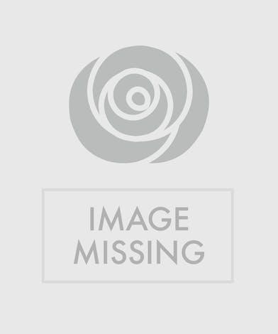 Classic Premium Dozen Roses - Eastern Floral - Grand Rapids, Holland, Grand Haven, Spring Lake, MI Flower Delivery