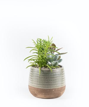 Two-Tone Succulent Planter