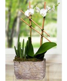 Orchid Plant with Succulent