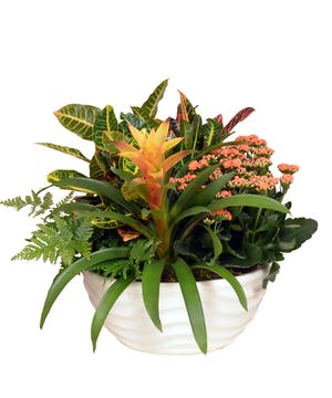 European Garden with Tropical Bromeliad