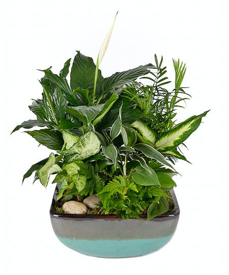 Green Plants & Gardens