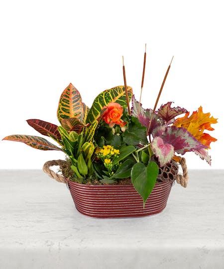 Blooming Plants & Gardens