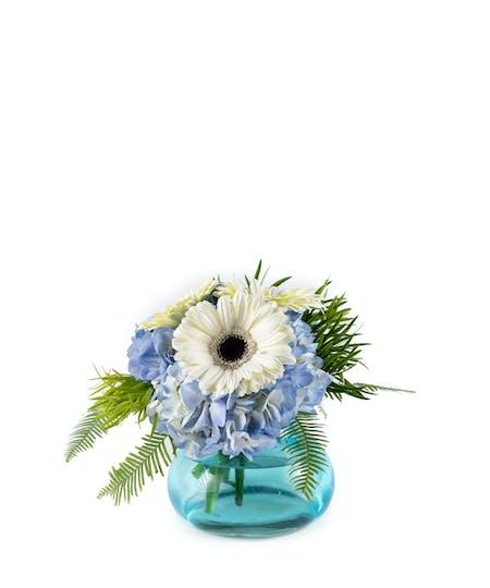 New Baby Flowers & Plants